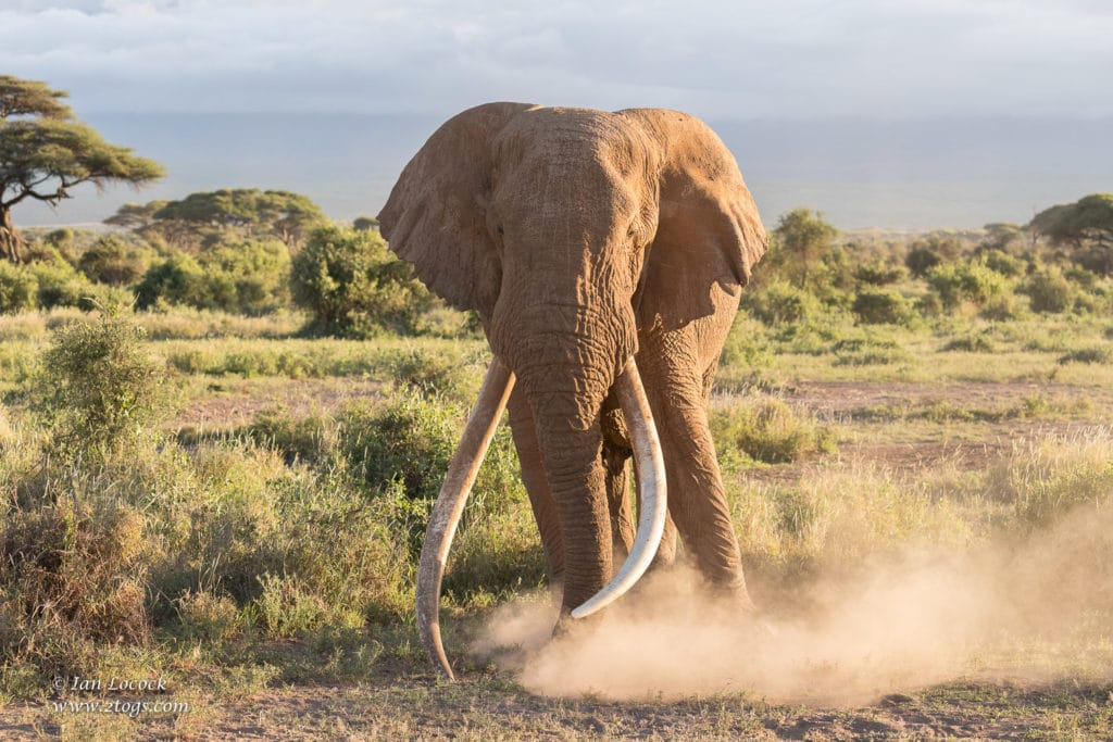 Amboseli - Tim kicking up the dust in the late afternoon light